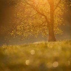 Autumn dream... by MartaC