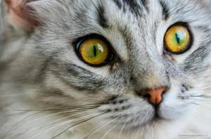 His beautiful eyes by SvanderHolst