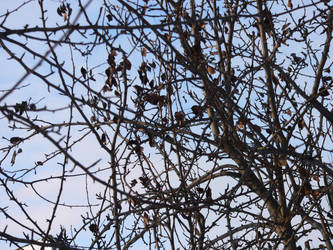 tree, again by Simplistical
