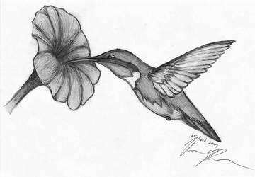 Flight of the Hummingbird by DrachenPanther5