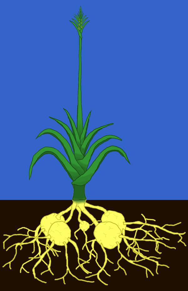 A Cultivar by Imperator-Zor