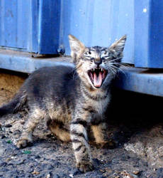 Dangerous kitte by GILZUR