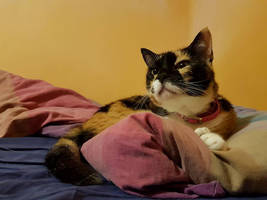 Eine Katze by GILZUR