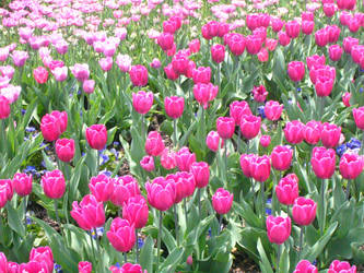 Longwood Gardens: 56 by jr----fave-resources