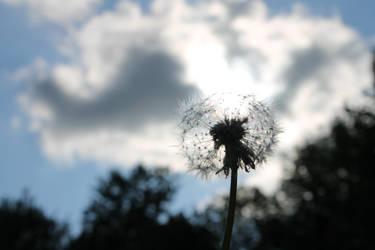 Make a Wish by amylee111