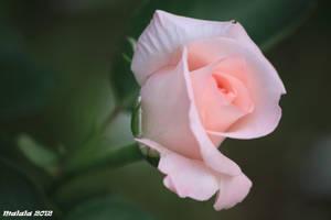 For you by malaladanila
