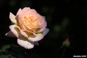 For you40 by malaladanila