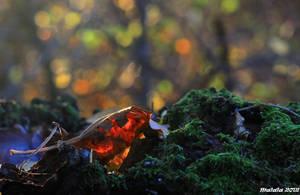 Whispers of nature by malaladanila