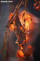Autumn jewels1 by malaladanila