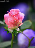For you62 by malaladanila