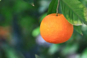 Orange by malaladanila