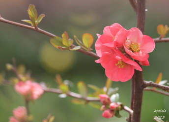 Spring time5 by malaladanila