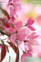 Spring time12 by malaladanila