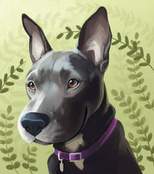 Pitbull portrait by sambragg
