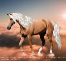 Horse Photo Manipulation 6 by Medi-terranean