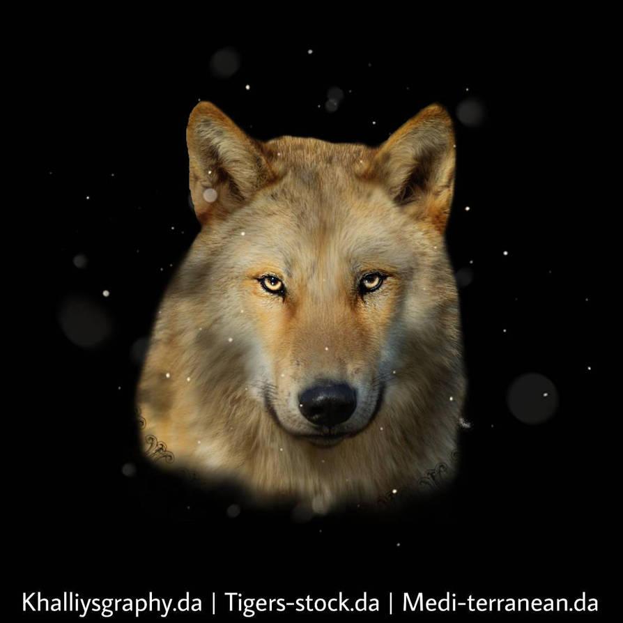Wolf Avatar by Medi-terranean