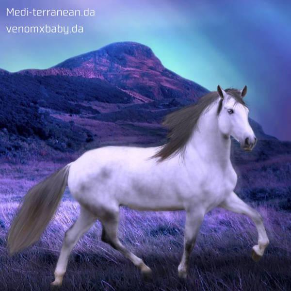 horse avatar by Medi-terranean
