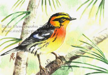 Blackburnian warbler by rieke-b