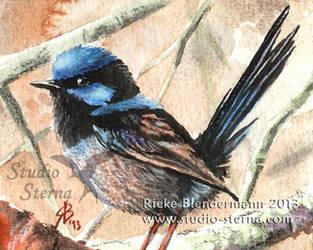 Superb fairywren - mini painting for sale by rieke-b