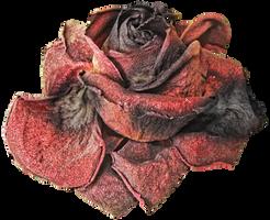 Dead Rose PNG by KarahRobinson-Art