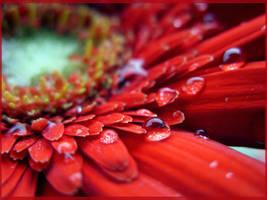 Red velvet by LaForceDuSilence
