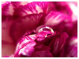 Blissful pink by LaForceDuSilence