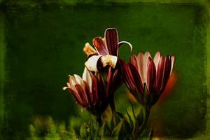 Grungy Flowers by Azzura98