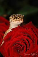 Happy Valentine's Day - V.2 by Emma-Lawlor
