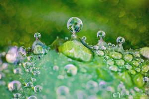 Rain's Ephemeral Crown by alexgphoto