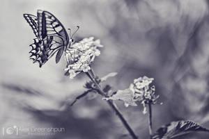 Flutter by alexgphoto