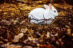 Follow the White Rabbit by alexgphoto