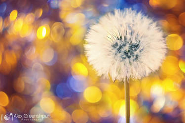 Make a Wish by alexgphoto