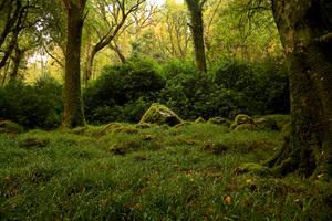 Nature 06 by Dark-Wolfs-Stock