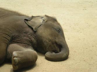 Lazy baby elephant by 23408
