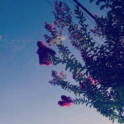 The Flowers in Cali by muffla