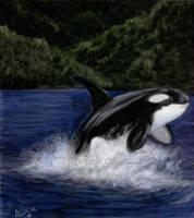 Orca by Nirvelli-V