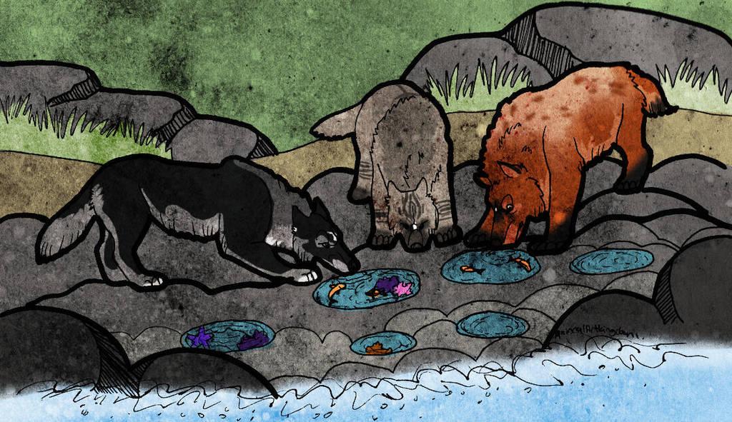 The Ocean Pools by AnimalArtKingdom