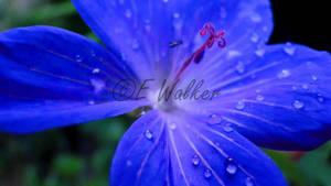 Droplets by LittleMissMischief