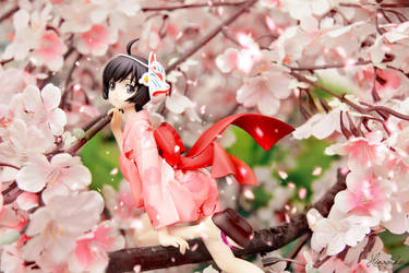 Sakura !! by HinagikuPhotograhy