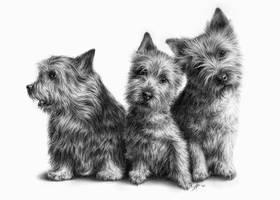 Commission: Dog portrait by D17rulez