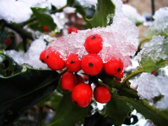 Frozen Berries by Personal-Pariah