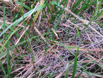 Beads of Dew by Personal-Pariah