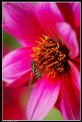 Fly on a flower by delbarital