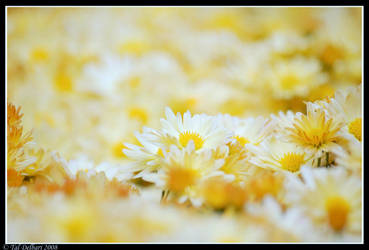 Yellow carpet by delbarital