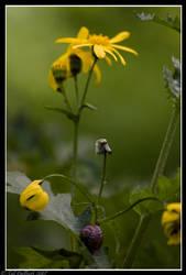 Nature by delbarital
