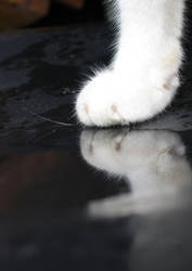 paws. by fakhirah
