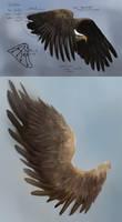 Wing Study and Practice by JoshSummana