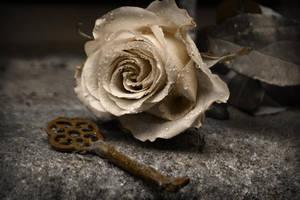 Golden Rose by Amy-Heartbreak