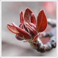 Spring Macro II by kezz
