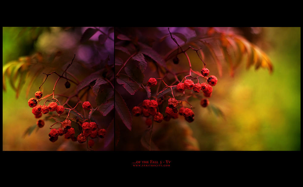 ...of the Fall 3 by yv